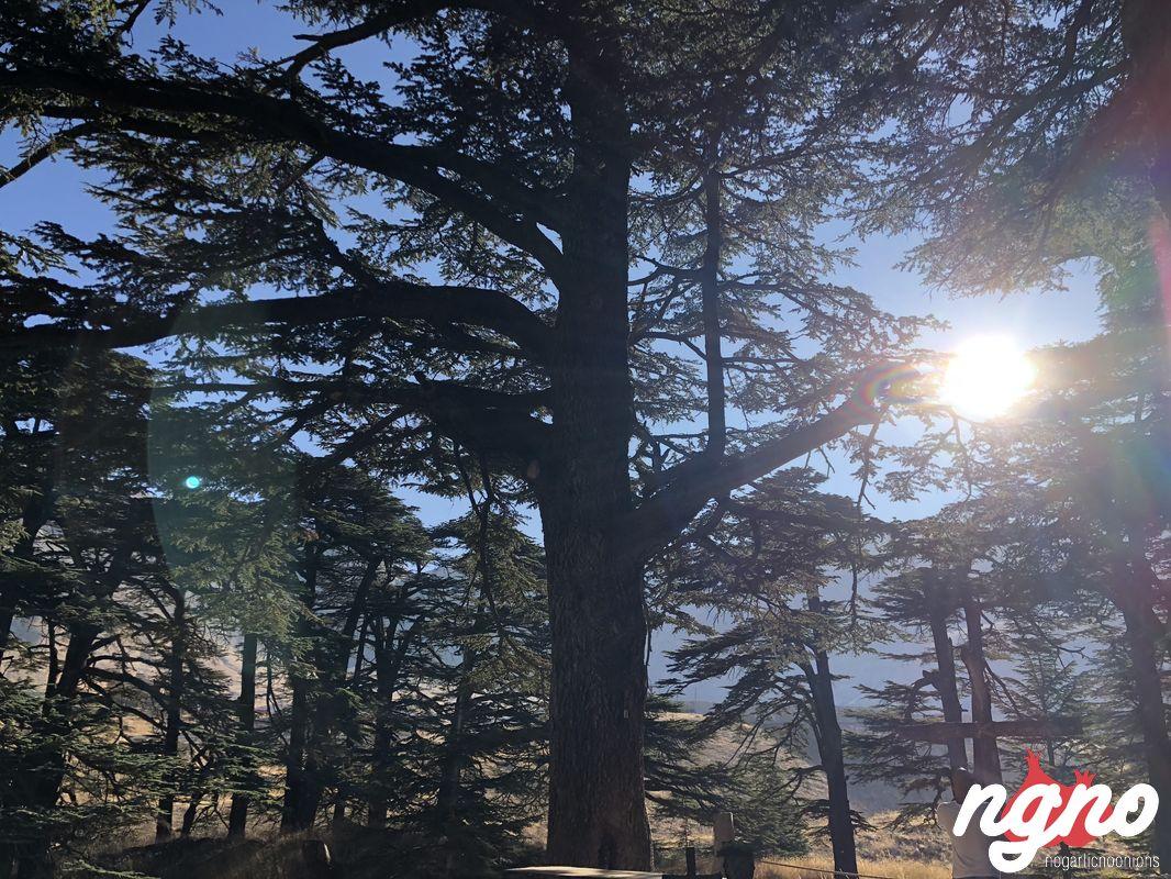 cedars-god-lebanon-nogarlicnoonions-122018-09-22-02-51-05
