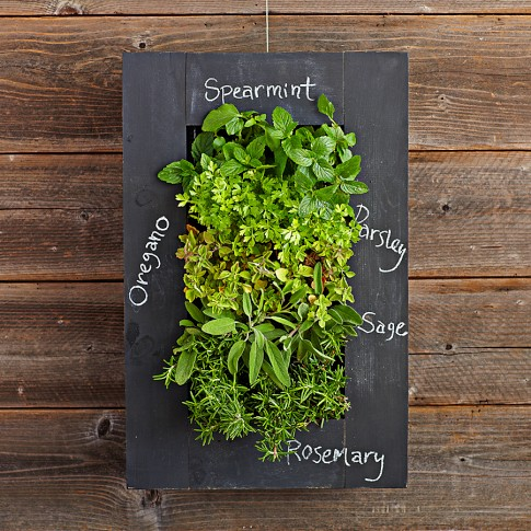 Chalkboard Wall Planter Perfect Home Garden NoGarlicNoOnions