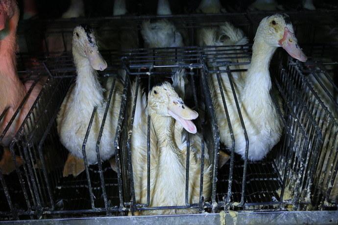 15-foie-gras-soulard-palace-restaurant-Paris-08-2013