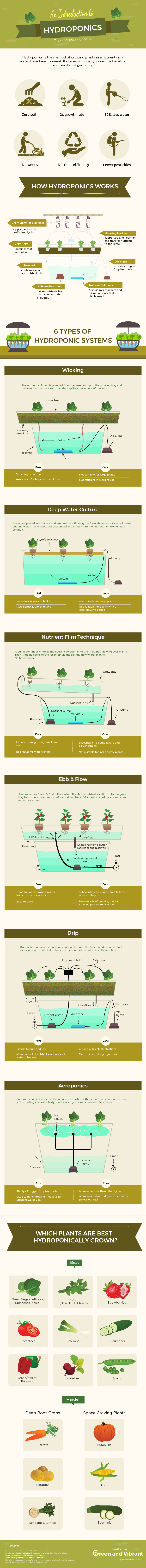 hydroponic-gardening-infographic