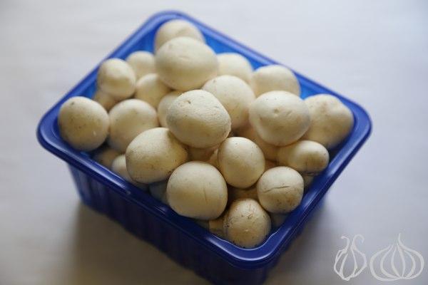 Mushrooms_Farming_Frenji_Jbeil_Lebanon097