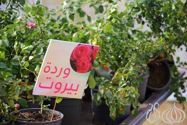 Garden_Show_Spring_Festival_Beirut_Lebanon07